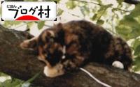 B-miya_20190314073626a22.jpg