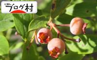 C-bulueberry3.jpg