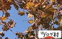 C-kaede_20181022074434ed1.jpg