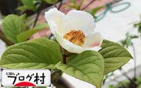C-sharanoki_20181211075523dee.jpg