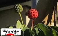 C-yamabousi_201906120751108b9.jpg