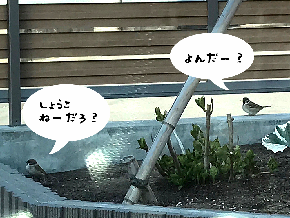IMG_2281.jpg