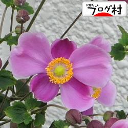 IMG_9832.jpg
