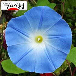 asagao_201907270813280f6.jpg