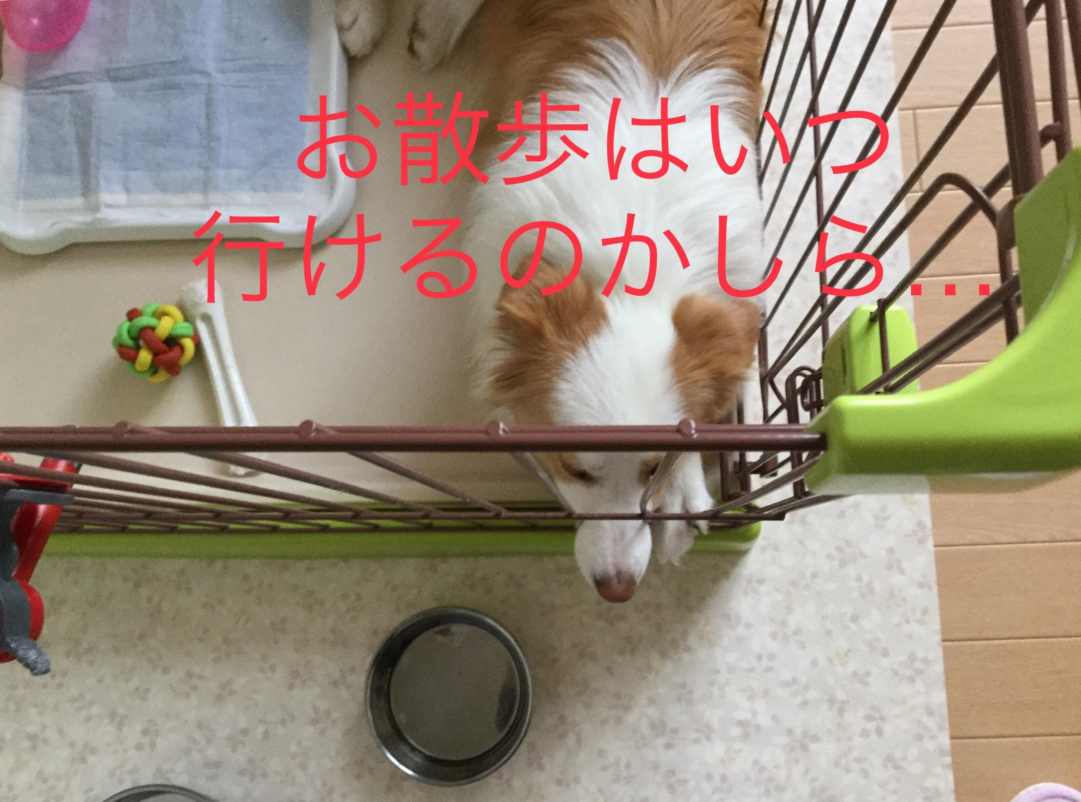 IMG_E1650.jpg