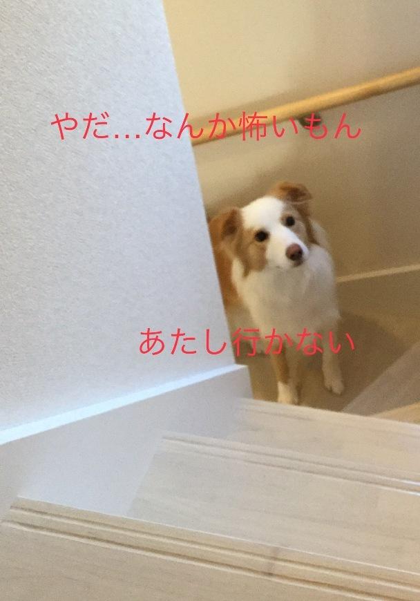 IMG_E1669.jpg