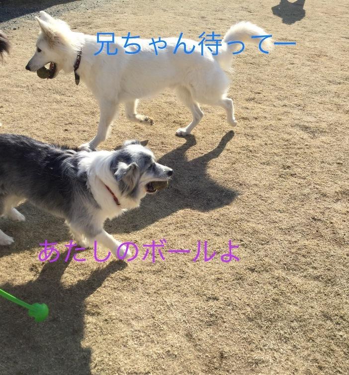 IMG_E1855.jpg