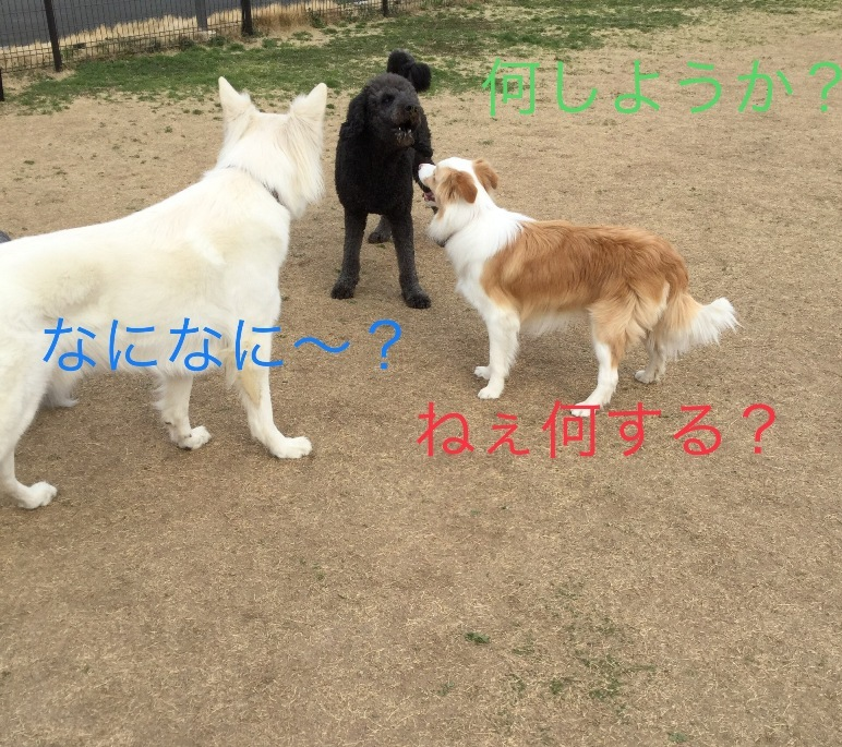 IMG_E3094.jpg