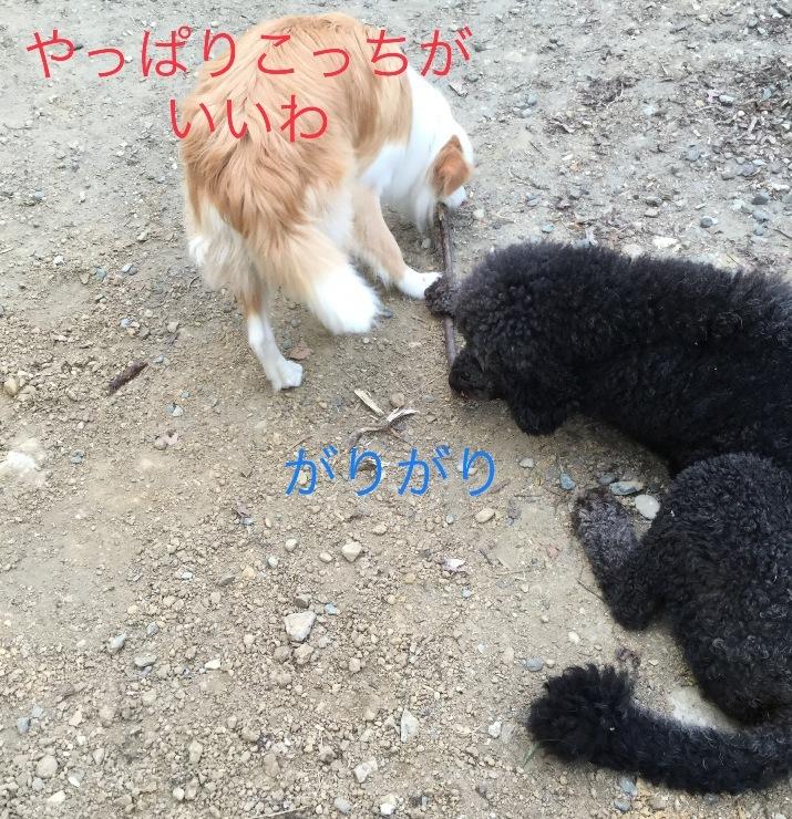 IMG_E3467.jpg