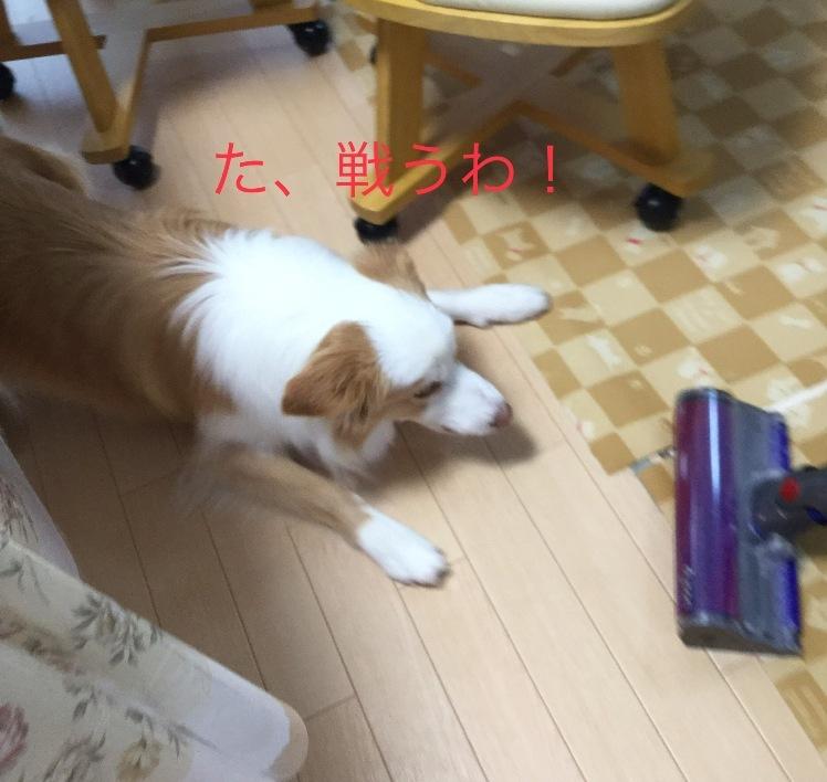 IMG_E4004.jpg
