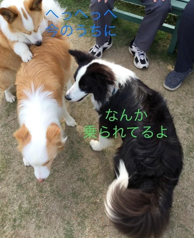 IMG_E4602.jpg