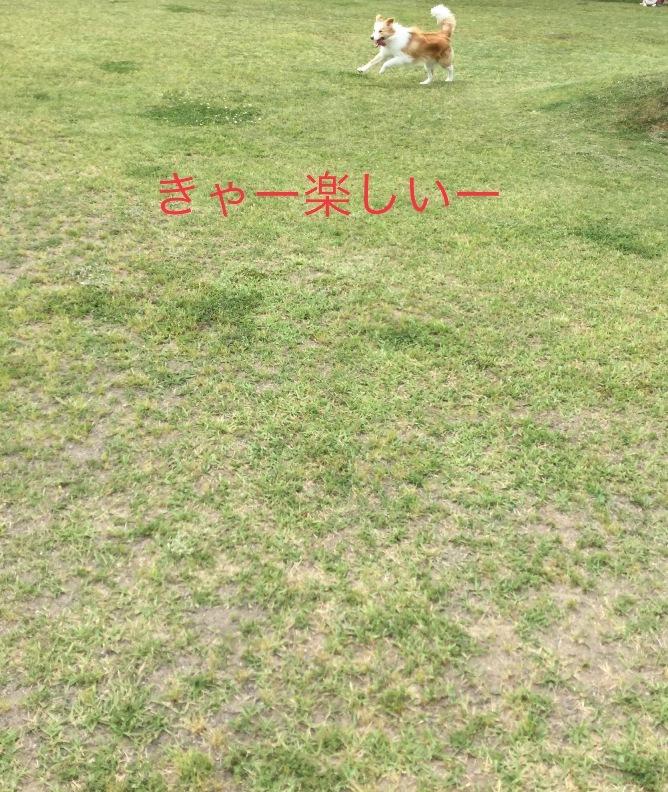 IMG_E5290.jpg