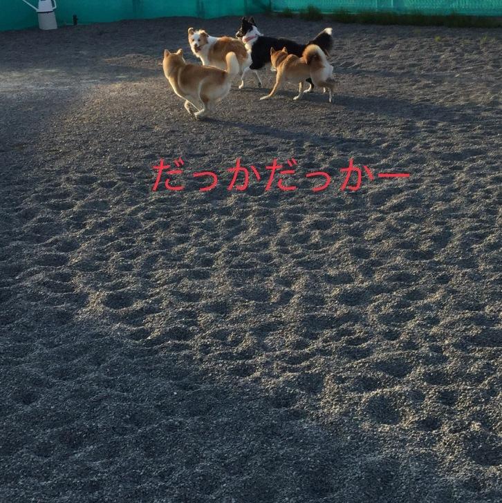 IMG_E5440.jpg