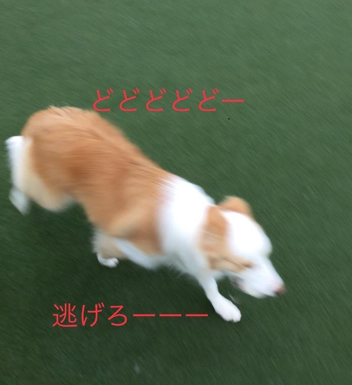 IMG_E5955.jpg