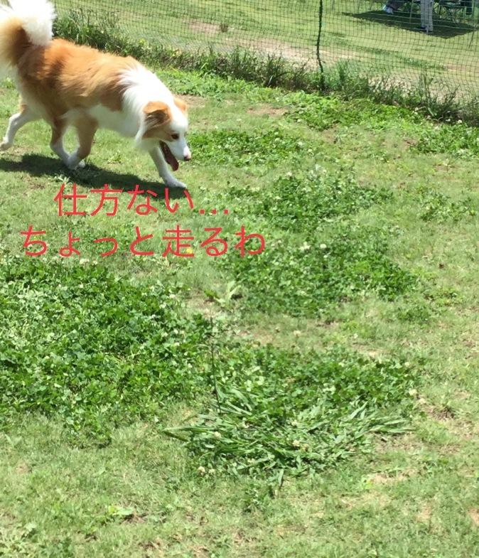 IMG_E6135.jpg