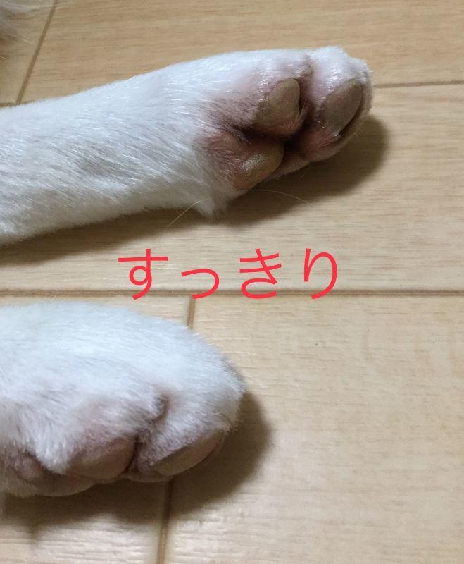 IMG_E6872.jpg