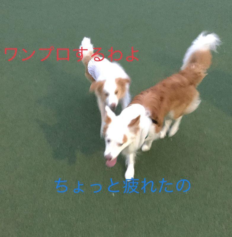 IMG_E7147.jpg