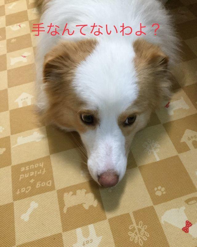 IMG_E7213.jpg