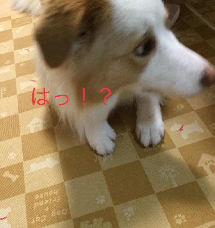 IMG_E7214.jpg