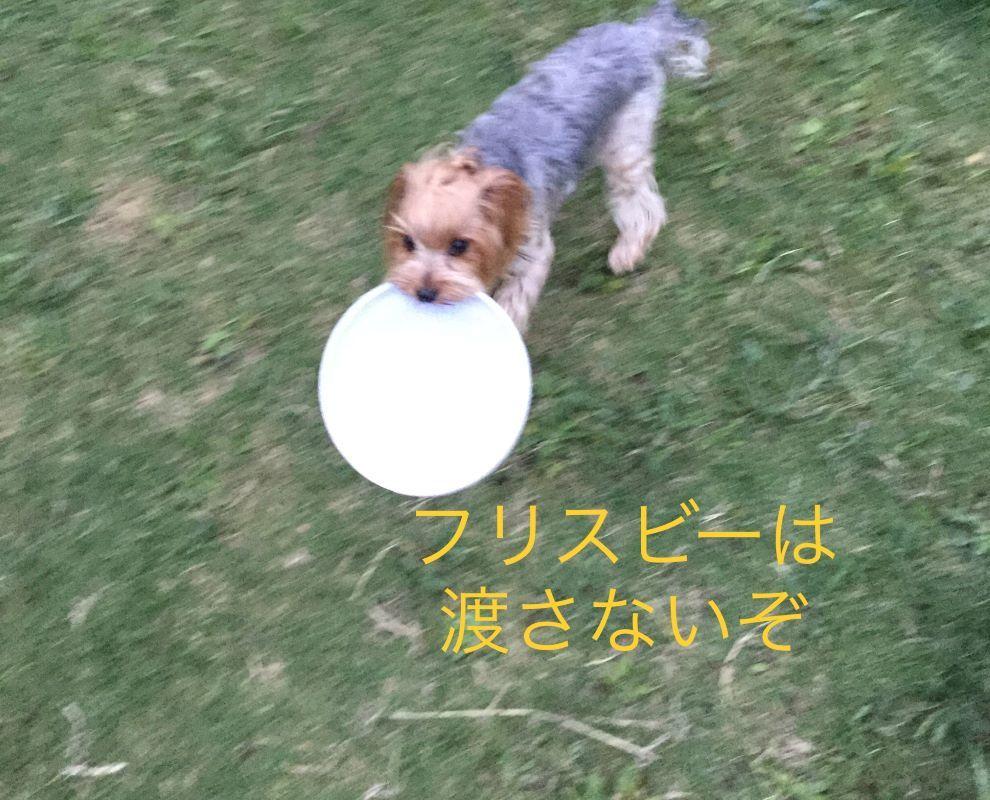 IMG_E7298.jpg