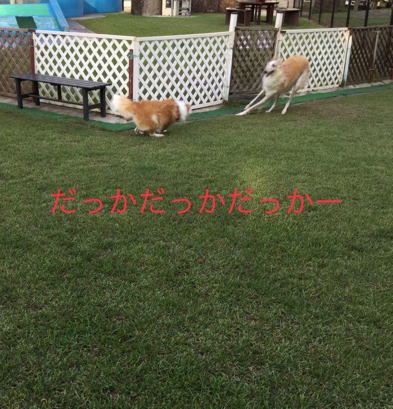 IMG_E7420.jpg