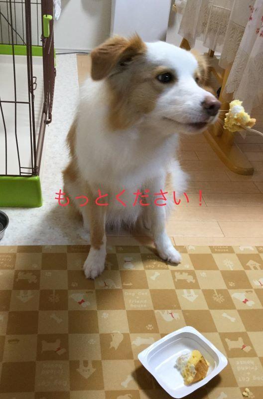 IMG_E7531.jpg