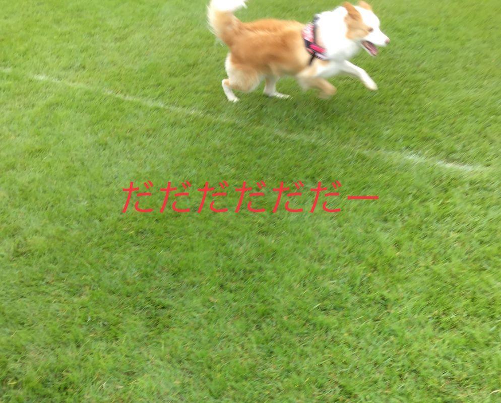 IMG_E8048.jpg