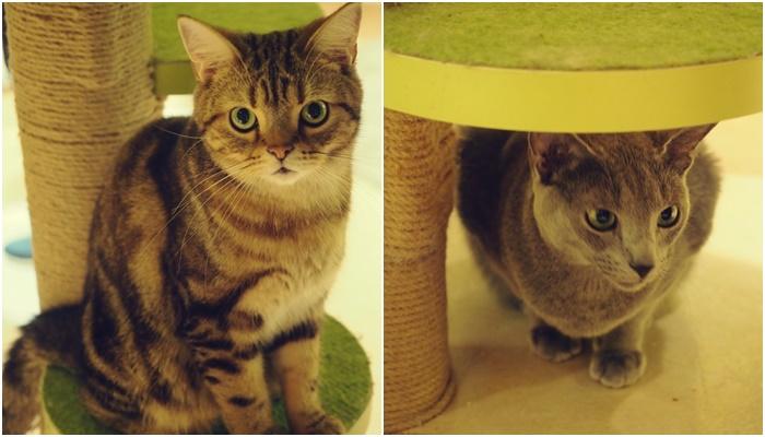 cat190713.jpg
