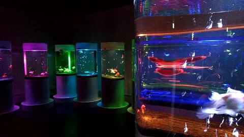 奈良祭都 金魚ミュージアム