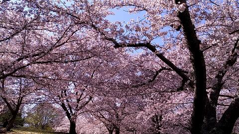 2019.04お花