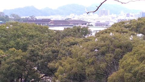 和歌山城 鳥