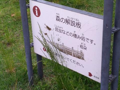ファミリー公園 散策