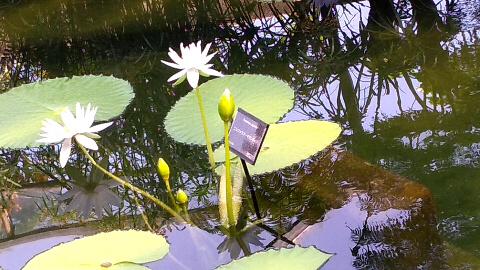咲くやこの花館 観光