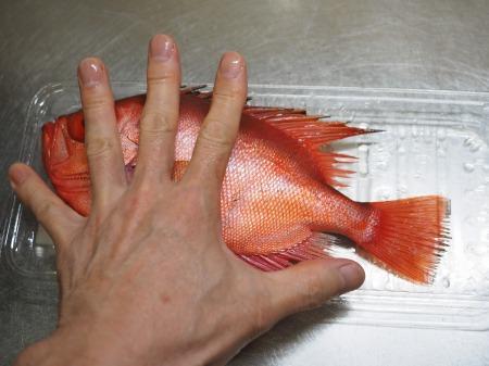 金時鯛の煮付け050