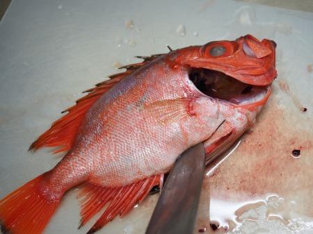 金時鯛の煮付け069