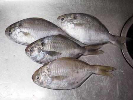 モチウオと厚揚げの煮付け027