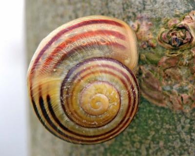 2d333f263d11e1b06a11ffb6cf3a4ae1--sea-shells-snails_convert_20181214134730.jpg