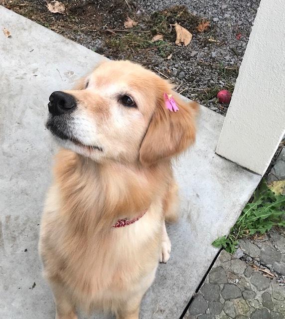 お花をつけてもらったよ♪