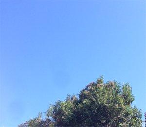 雲一つない青空