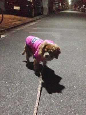 夜の散歩セン ジャケット
