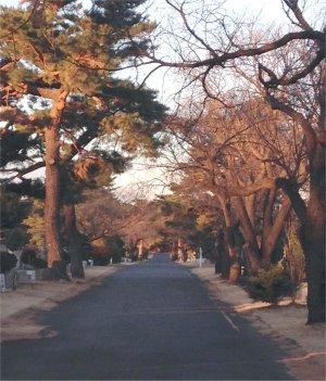 朝の道1月