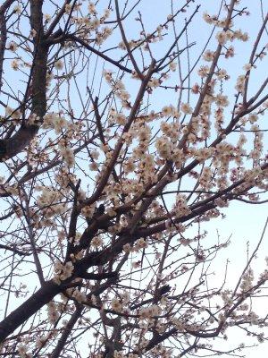 梅の花も咲いて190227