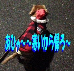 寒いから帰ろセン190309