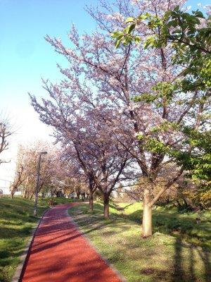 桜190409