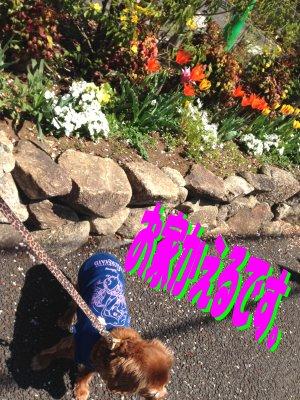 花壇とセン190414