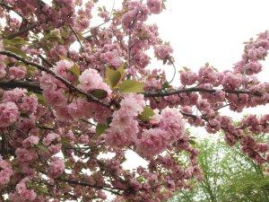 今日の花190423
