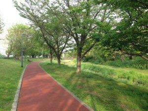 緑のある風景190423
