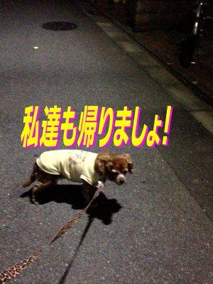 夜のお散歩セン190424