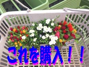 お花購入 190506