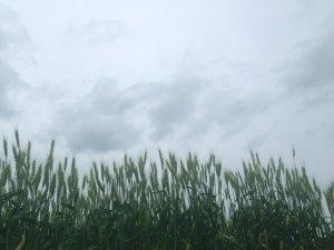 曇り空190519